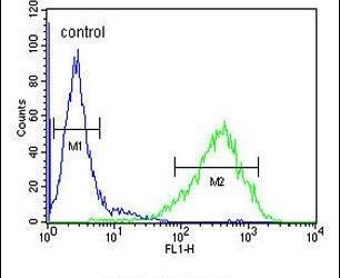RAB3IL1 Antibody (PA5-24512) in Flow Cytometry