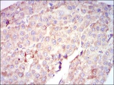c-Raf Antibody (MA5-17162)