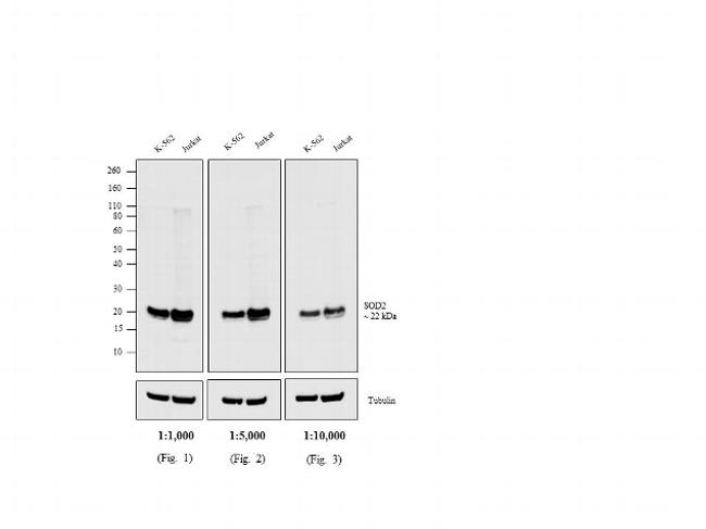 Mouse IgG Secondary Antibody (SA1-72020) in Western Blot