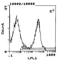 Rat Ig, kappa Secondary Antibody (SA5-10181) in Flow Cytometry