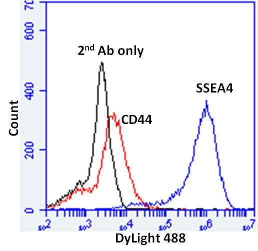 SSEA4 Antibody (MA1-021X) in Flow Cytometry