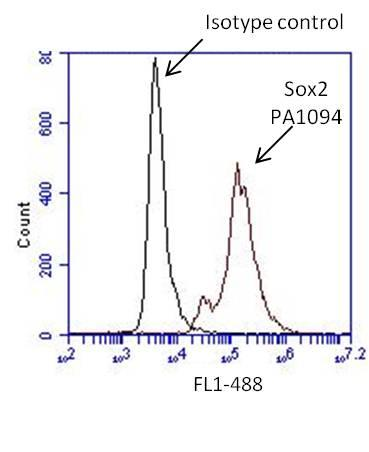 SOX2 Antibody (PA1-094) in Flow Cytometry