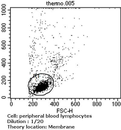 TCR V alpha 12.1 Antibody (TCR2764) in Flow Cytometry