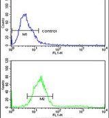 TECPR1 Antibody (PA5-14283) in Flow Cytometry