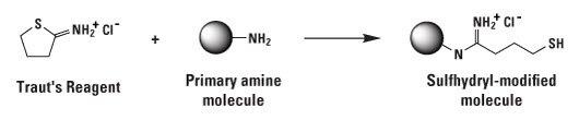2-Iminothiolane