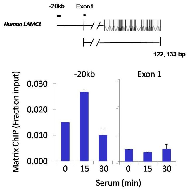 Tri-Methyl-Histone H3 (Lys27) Antibody (MA5-11198)