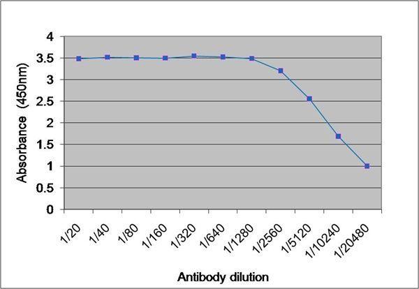 Tyrosinase Antibody (PA1-85947) in ELISA