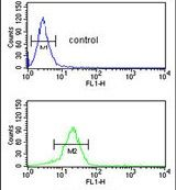 YAP1 Antibody (PA5-13504) in Flow Cytometry