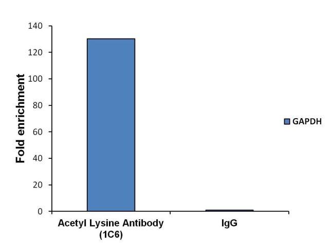 Acetyl Lysine Antibody (MA1-2021) in ChIP assay