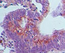 GBP1 Antibody (PA5-23509)