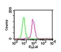IKK alpha Antibody (MA5-16157) in Flow Cytometry