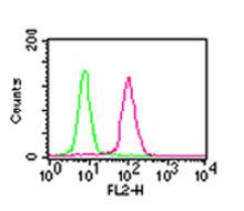 NFkB p65 Antibody (MA5-16160) in Flow Cytometry