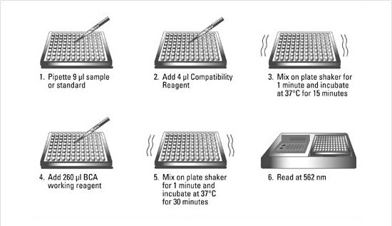 Pierce Microplate BCA Protein Assay Kit - Reducing Agent ...