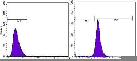 beta Actin Antibody (MA5-15452) in Flow Cytometry