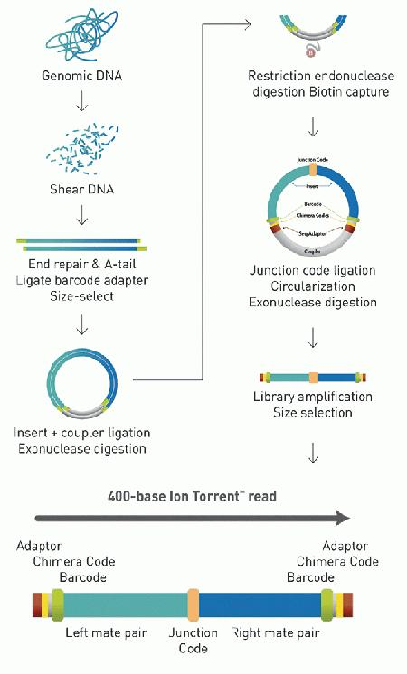 This is a schematic summarizing Ion TrueMate™ Library construction workflow and expected sequence context of resulting 400 bp fragments used for templating and Ion PGM™ sequencing.