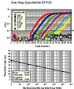 One-Step Quantitative RT-PCR