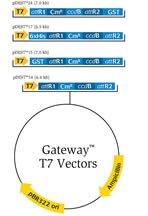 Destination Vectors for E. coli Expression