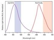 <em>Cypridina</em>-Firefly Luciferase Dual Assay emission spectra profile