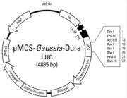 Plasmid map of the pMCS-<em>Gaussia</em>-Dura Luc Vector