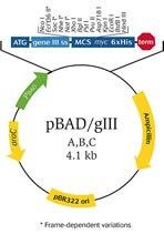 pBAD/gIII vector