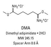 Chemical structure of DMA crosslinking reagent