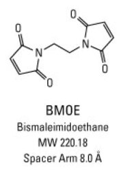 Chemical structure of BMOE crosslinking reagent