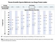 Migration patterns of Spectra Multicolor Low Range Protein Ladder in different electrophoretic conditions