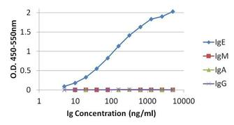Human IgG (H+L) Cross-Adsorbed Secondary Antibody (31119)
