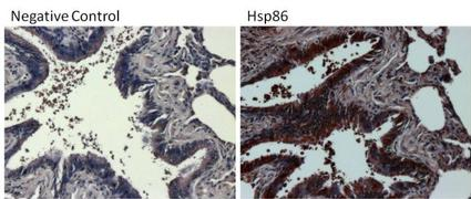 Rabbit IgG (H+L) Secondary Antibody (31466)