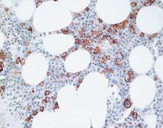 CD138 Antibody (36-2900)