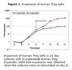 figure 1. Expansion of human Treg cells