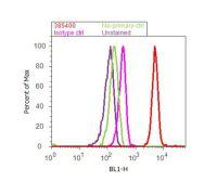 SMAD1 Antibody (38-5400)