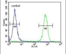 MARCH5 Antibody (PA5-25584)