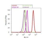 Phospho-SMAD2 (Thr8) Antibody (44-240G)