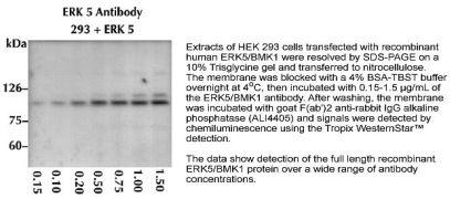 ERK5 Antibody (44-688G)