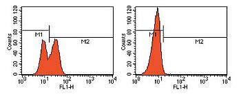 PARP (Cleavage site 214 / 215) Antibody (44-699)