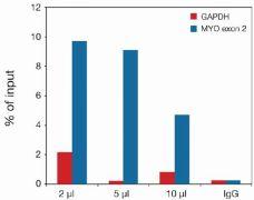 Di-Methyl-Histone H3 (Lys27) Antibody (49-1013)
