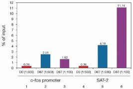 Tri-Methyl-Histone H4 (Lys20) Antibody (49-1024)
