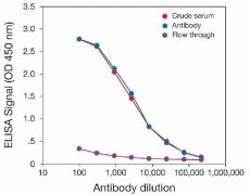 HDAC1 Antibody (49-1025)