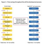 Figure 1 - Time savings throughout the cell line development process.