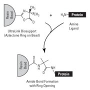 Immobilization chemistry of UltraLink Biosupport
