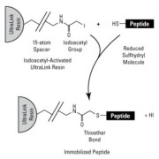 Peptide immobilization chemistry for Iodoacetyl-Activated UltraLink Resin