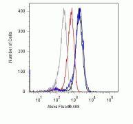 Phospho-PLCG1 (Tyr783) Antibody (700044)