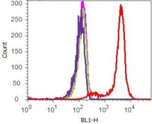 phospho-CREB (Ser 133) Antibody (700129)