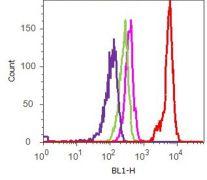 Phospho-FAK (Tyr861) Antibody (700154)