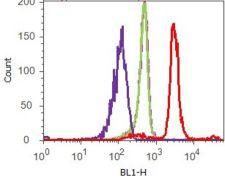 Phospho-4E-BP1 pThr37 Antibody (700238)