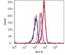 c-Met Antibody (700261)