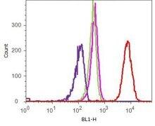 c-Myc Tag Antibody (700648)