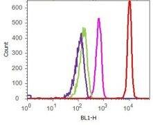 p21 Antibody (701151)