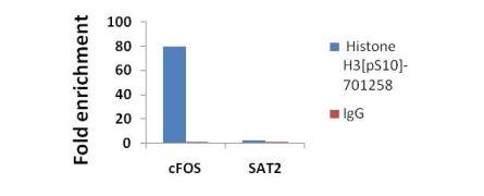 Phospho-Histone H3 (Ser10) Antibody (701258)